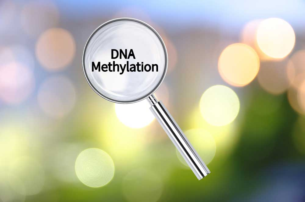 WHAT IS METHYLATION?